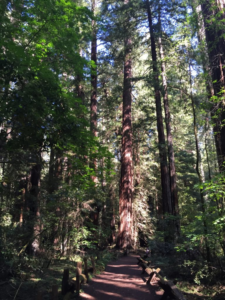 Armstrong Redwood Grove - Like being in church