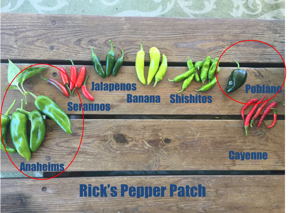Pepper Patch - Anaheims and Poblanos